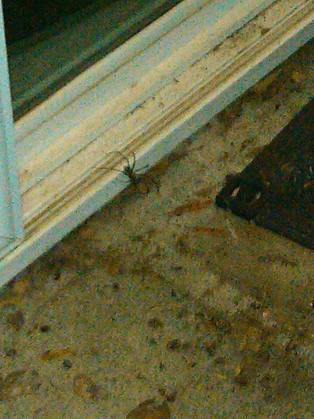 Click image for larger version.  Name:spider.jpg Views:105 Size:326.0 KB ID:52239